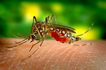 Preventative Vaccines for Insect-Borne Diseases